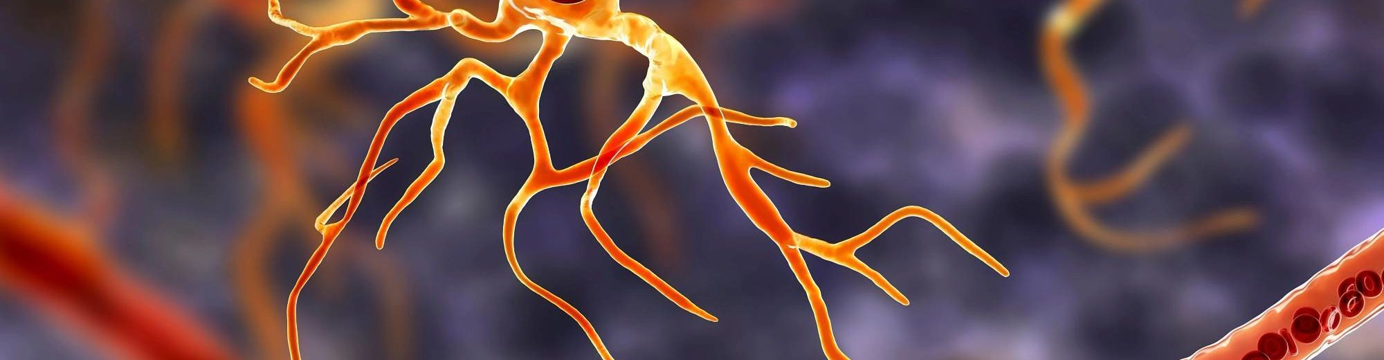 3D illustration of human brain neural cell Astrocyte - CNS Clinical Trials   Amarex